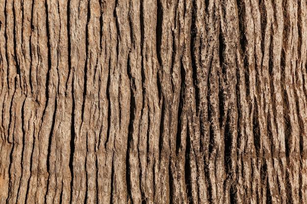 高貴な木のテクスチャの樹皮 Premium写真