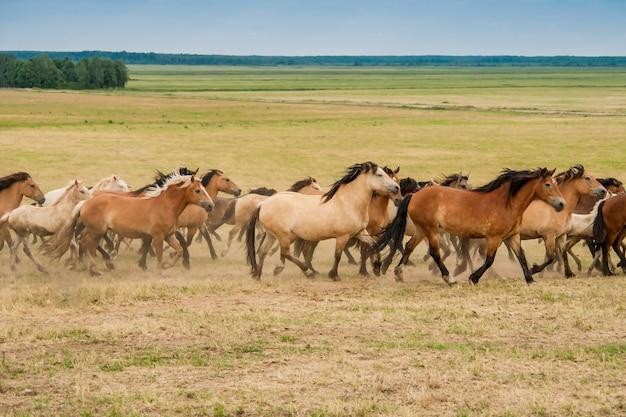 フィールド上の馬の群れを実行しています。 Premium写真