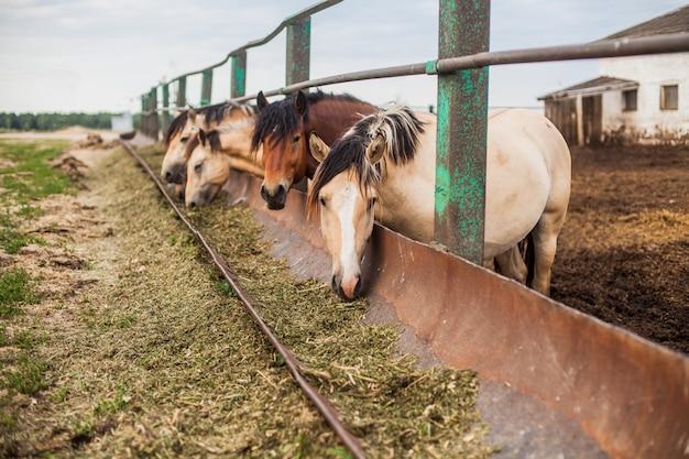 ペンで空腹の馬 Premium写真