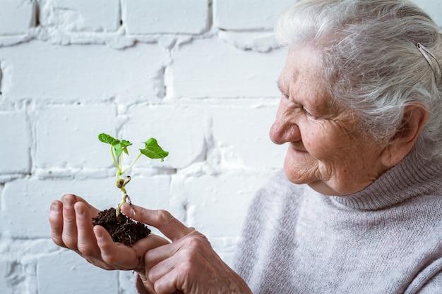 植物の成長を保持しているボランティアの女性 Premium写真