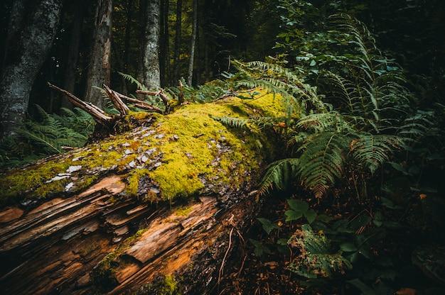 コケの森の木 Premium写真