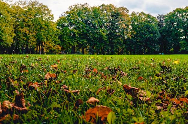 都市公園の秋 Premium写真