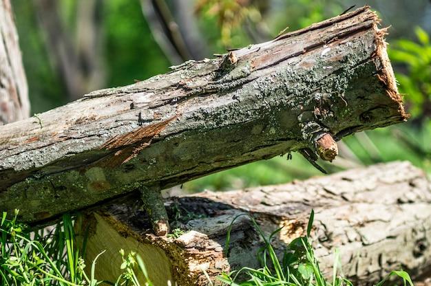 森の鋸で挽かれた木 Premium写真