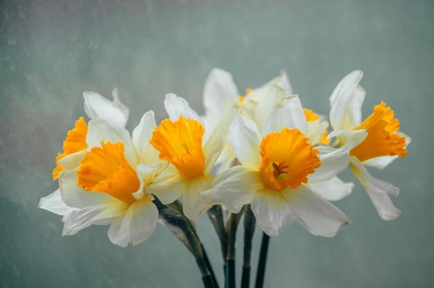 春の水仙の花束 Premium写真