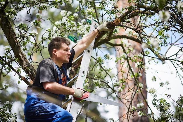 のこぎりで男は庭に咲くリンゴの木の枝を切ります。 Premium写真