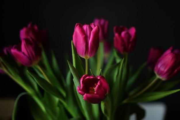 黒の背景に美しい紫のチューリップの花。グリーティングカード。セレクティブフォーカス Premium写真