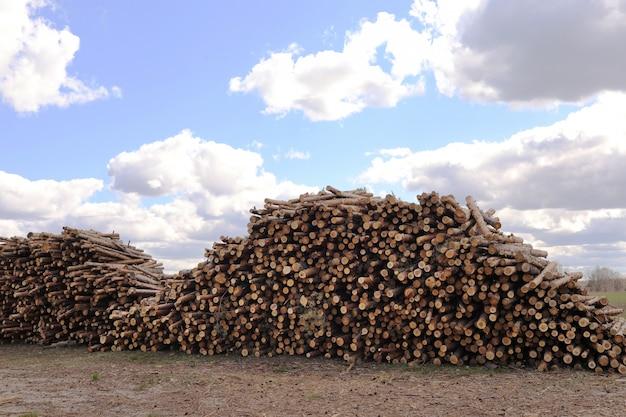 カットパインツリーのスタックは、フォレストにログインします。木材の丸太、木材の伐採、産業破壊、森林は消え、違法な伐採。セレクティブフォーカス。 Premium写真
