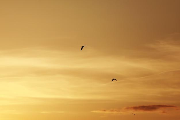 日没前の空、空の鳥。夕焼けと夕暮れの間に飛んでいる鳥 Premium写真