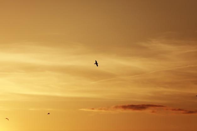 日没前の空、空の鳥。夕焼けと夕暮れの空の前に飛んでいる鳥 Premium写真