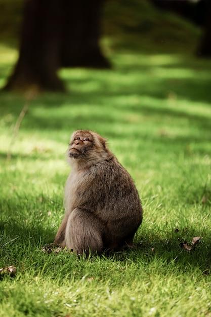 Портрет обезьяны в парке. обезьяны живут в дикой природе Premium Фотографии
