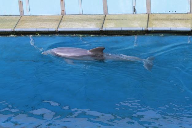 Дельфин в аквариуме Premium Фотографии