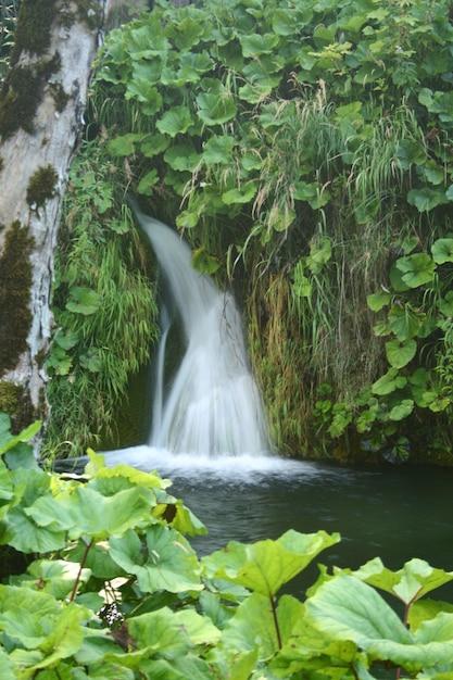 森の中の美しい滝 Premium写真