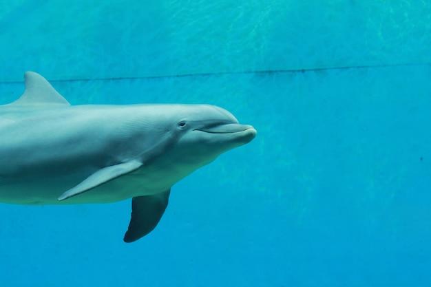 水族館のイルカ Premium写真