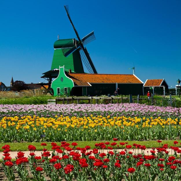 オランダの風車 Premium写真