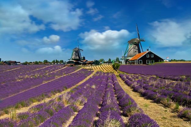 Фото мельницы в голландии с голубым небом Premium Фотографии