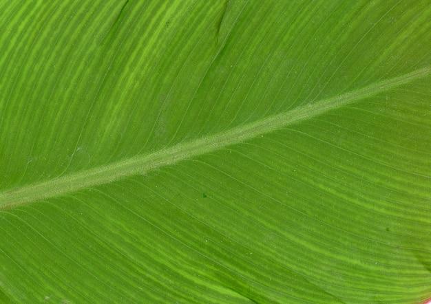 葉を閉じる 無料写真