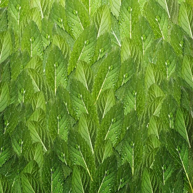 Узор из листьев мяты. свежая мята с каплями воды. Premium Фотографии