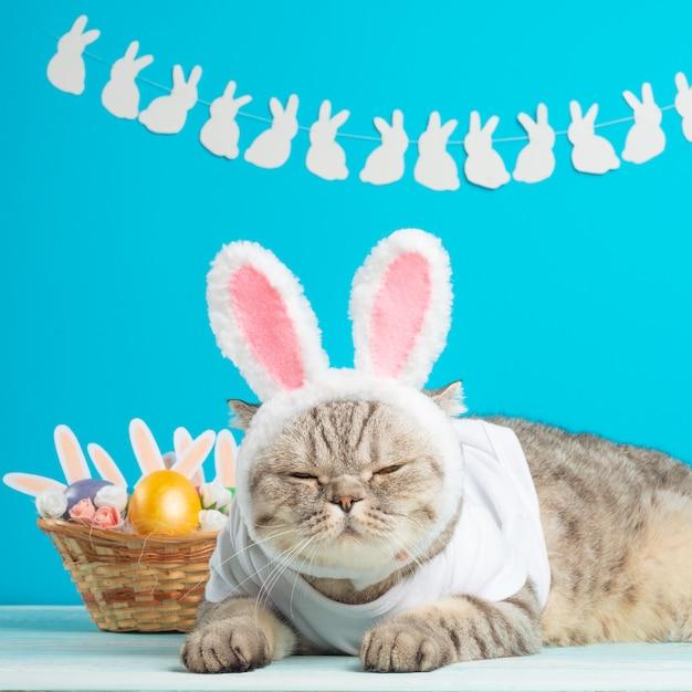 イースターエッグとウサギの耳を持つイースター猫。かわいい子猫 Premium写真