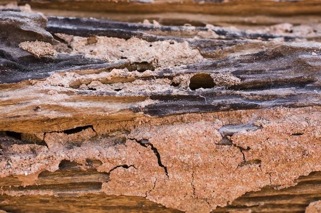 シロアリの痕跡は木を食べる Premium写真