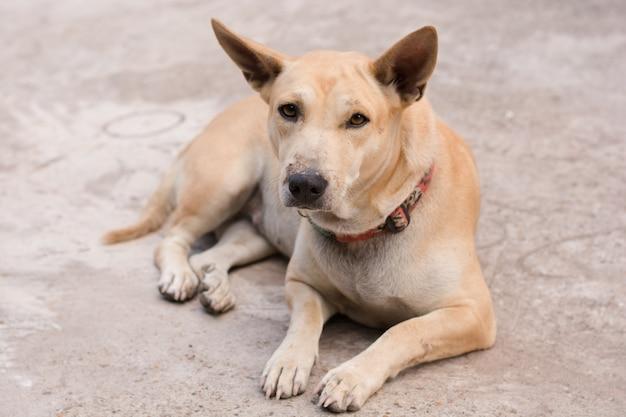 Собака сидит на бетонном полу Premium Фотографии