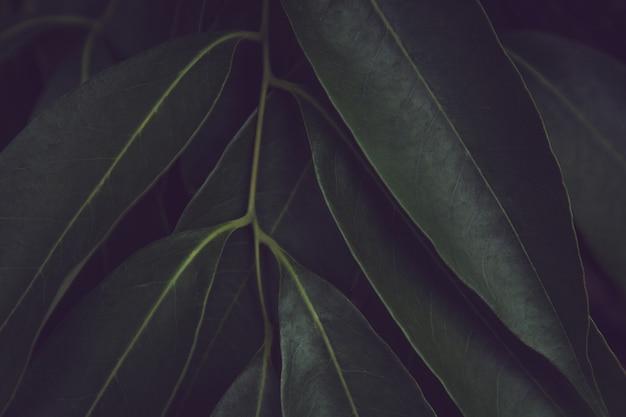 緑の葉のパターンの背景。サツマイモは、自然の濃い緑色のトーンの背景を残します。 Premium写真