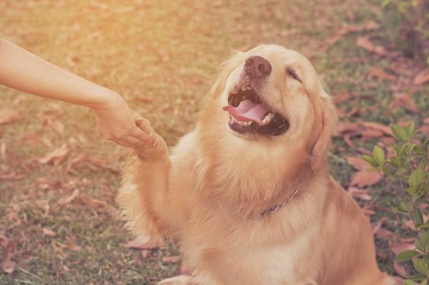 人間と犬の友情 Premium写真