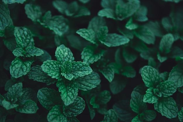 緑の葉の背景。 Premium写真