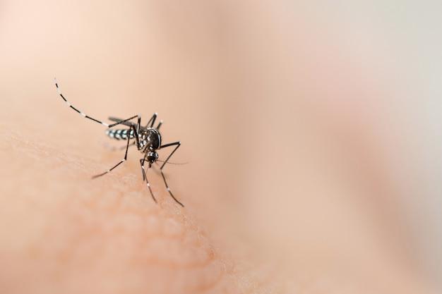 人間の皮膚から血を吸う蚊を閉じる Premium写真