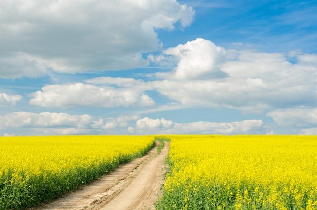 Дорога через поле рэпс в солнечный день Premium Фотографии