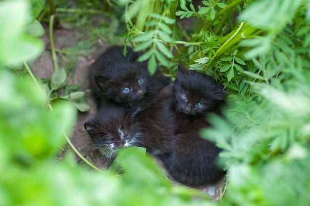 捨てられた黒い子猫、子猫はママを待っている、ホームレスの動物を助ける Premium写真