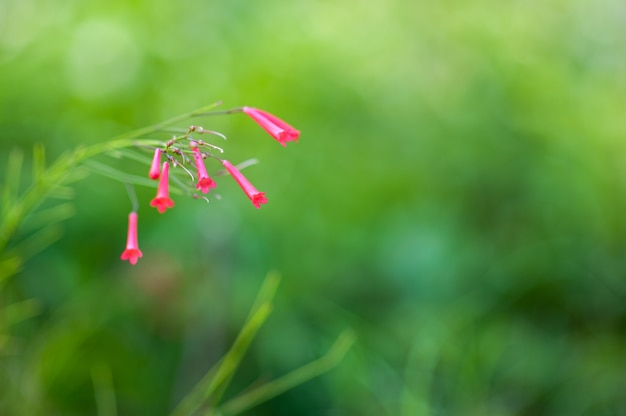緑の自然の赤い花、最初の春の花。 Premium写真