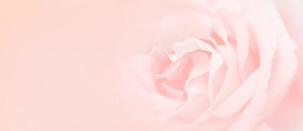 柔らかさピンクのバラの背景。 Premium写真