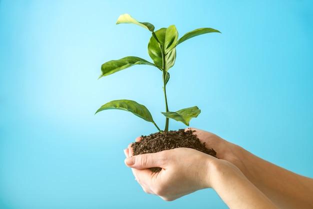 Росток нового зеленого дерева в почве в руках человека Premium Фотографии