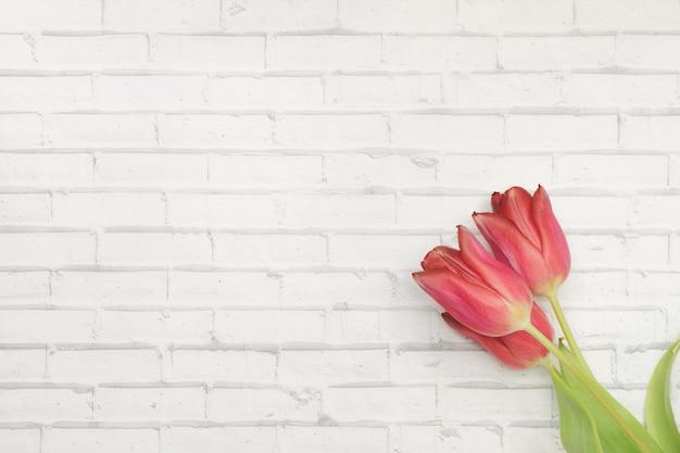 Красные цветы тюльпаны на белом фоне стены из кирпича Premium Фотографии