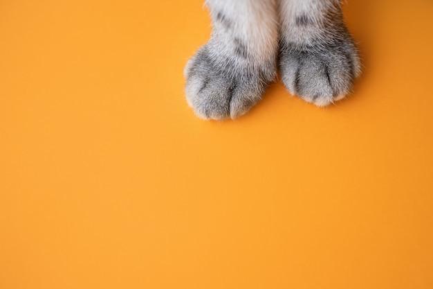 オレンジ色の背景に灰色の猫の足。 Premium写真