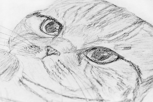 ノートにスケッチ:猫の鉛筆画。 Premium写真