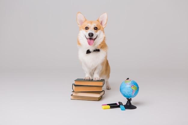 ウェルシュコーギーペンブロークの本と空の描画ボード、学校のコンセプト Premium写真