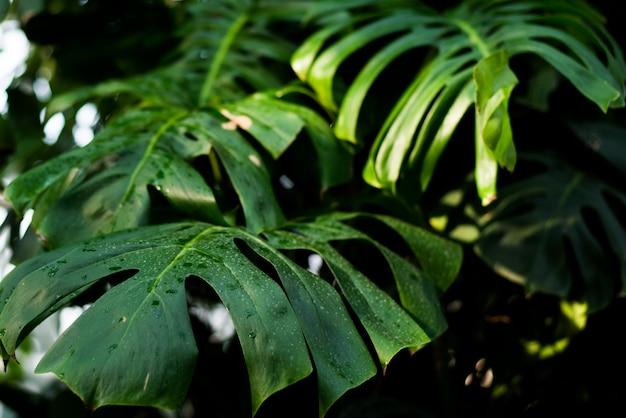 創造的な熱帯の緑の葉のレイアウト。 Premium写真