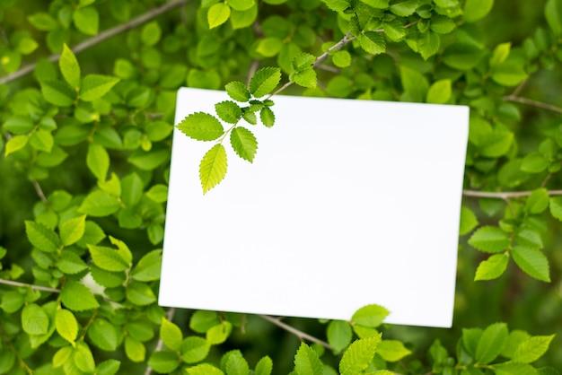 緑の葉の上の紙カードモックアップ Premium写真
