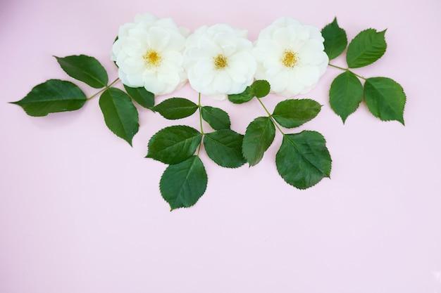 パステルピンクの白いバラ Premium写真