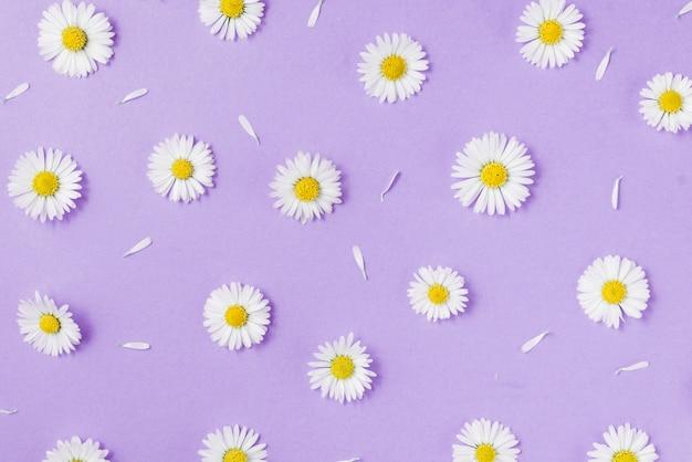 Композиция цветов. цветы ромашки на пастельно-голубой Premium Фотографии