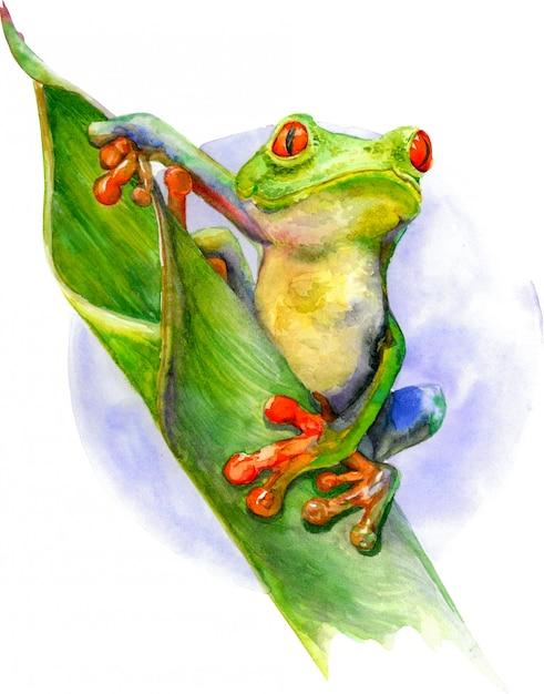 赤い目と緑の葉の上に座って指で緑のカエル。 Premium写真
