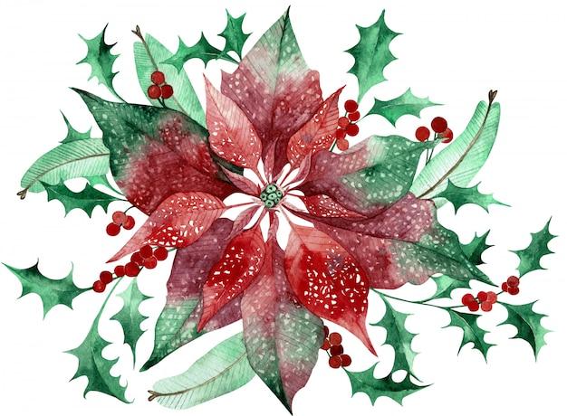 クリスマスの花の装飾が施された水彩画のポインセチア。手描きの伝統的な花と植物 Premium写真