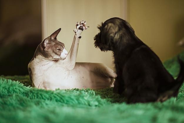 ベッドで子犬と遊ぶエジプトの猫 Premium写真
