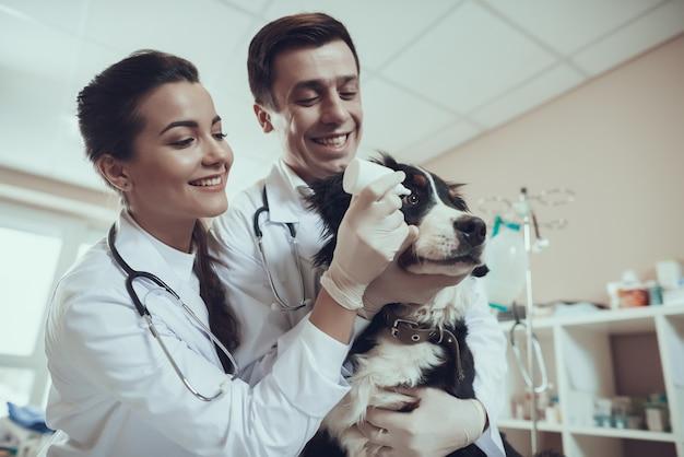 幸せな獣医は獣医クリニックで犬に点眼薬を適用します Premium写真