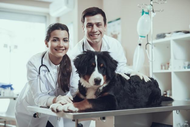 幸せな獣医とベルン犬のペットの健康管理。 Premium写真