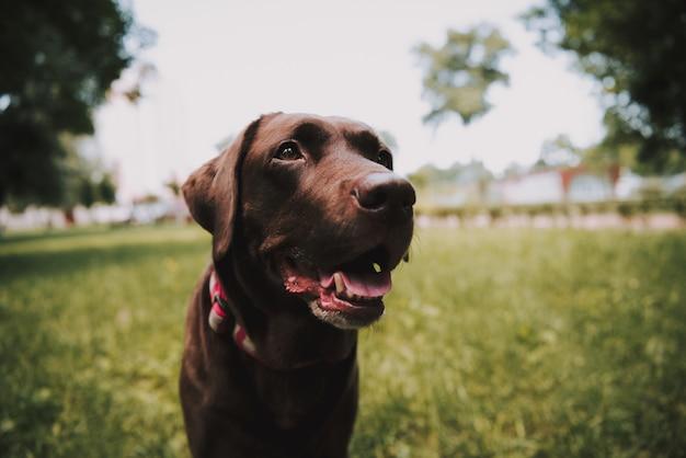 Черная собака позирует в летнем парке грин Premium Фотографии