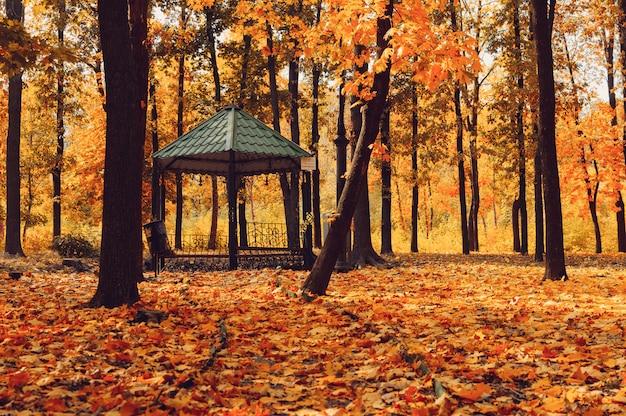 秋の日当たりの良い風景。 Premium写真