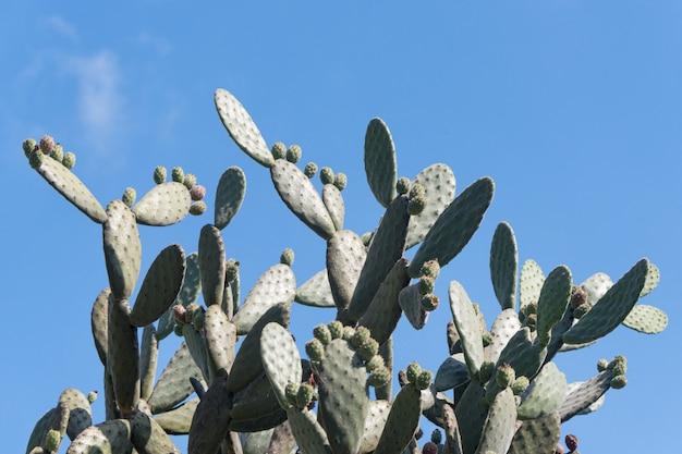 Кактус пейзаж. выращивание кактусов Premium Фотографии