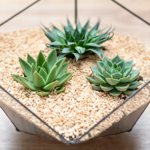 Стеклянная флорариумная ваза с суккулентными растениями и маленьким кактусом на дереве Premium Фотографии